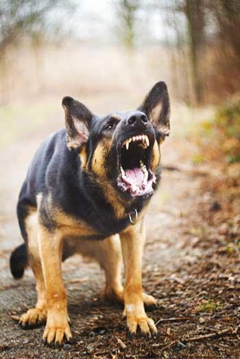 Harrisonburg top dog trainer