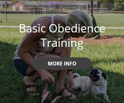 basic obedience training