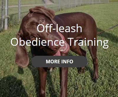 off leash obedience training