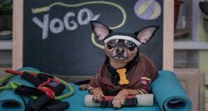 pest dog trainer