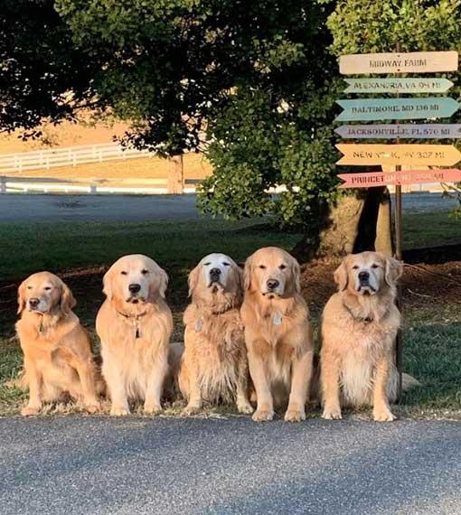 dog training process
